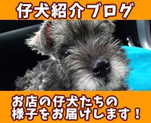 仔犬紹介ブログ